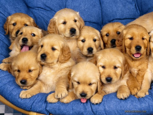Aaaaaawwwwwwwwww-Sweet-puppies-9415255-1600-1200